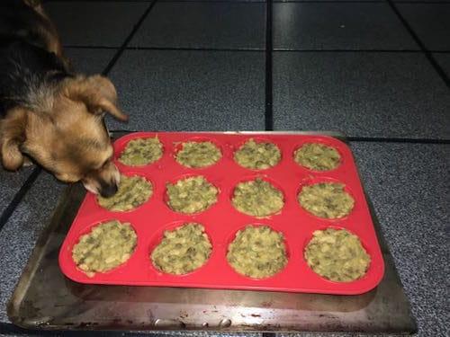 Adventures With Vegan Dog Food Singing Vegan