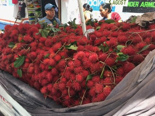 pickup truck full of rambutan
