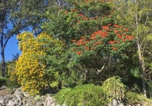 Guatemala fall colors