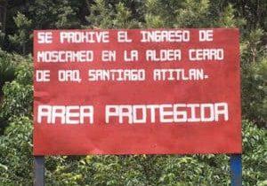 Cerro de Oro has some words for the medfly